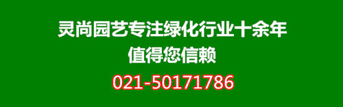 灵尚园艺植物租赁